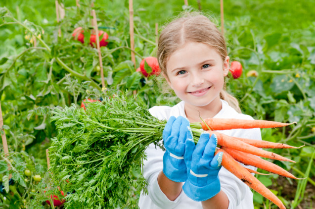 From the Ground Up: Tips for First-Time Gardeners