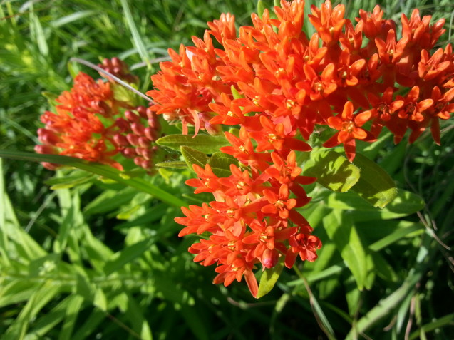 7 Powerful Prairie Herbs You Might Not Know