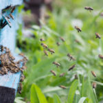 Bees provide nature's remedy for allergy symptoms