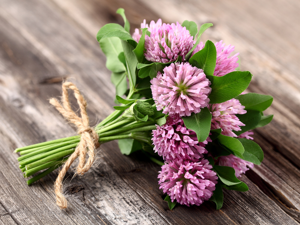 Red Clover is a traditional hormone regulator