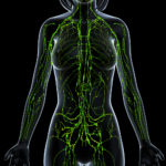 Herbs restore Lymphatic system function